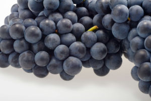 Añada Conocimiento Rioja Alavesa. Formación en Rioja Alavesa