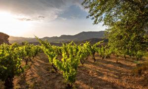 Viajes de Formación Rioja Alavesa
